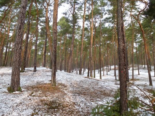 Schöner Wald in Staré Splavy, Tschechien